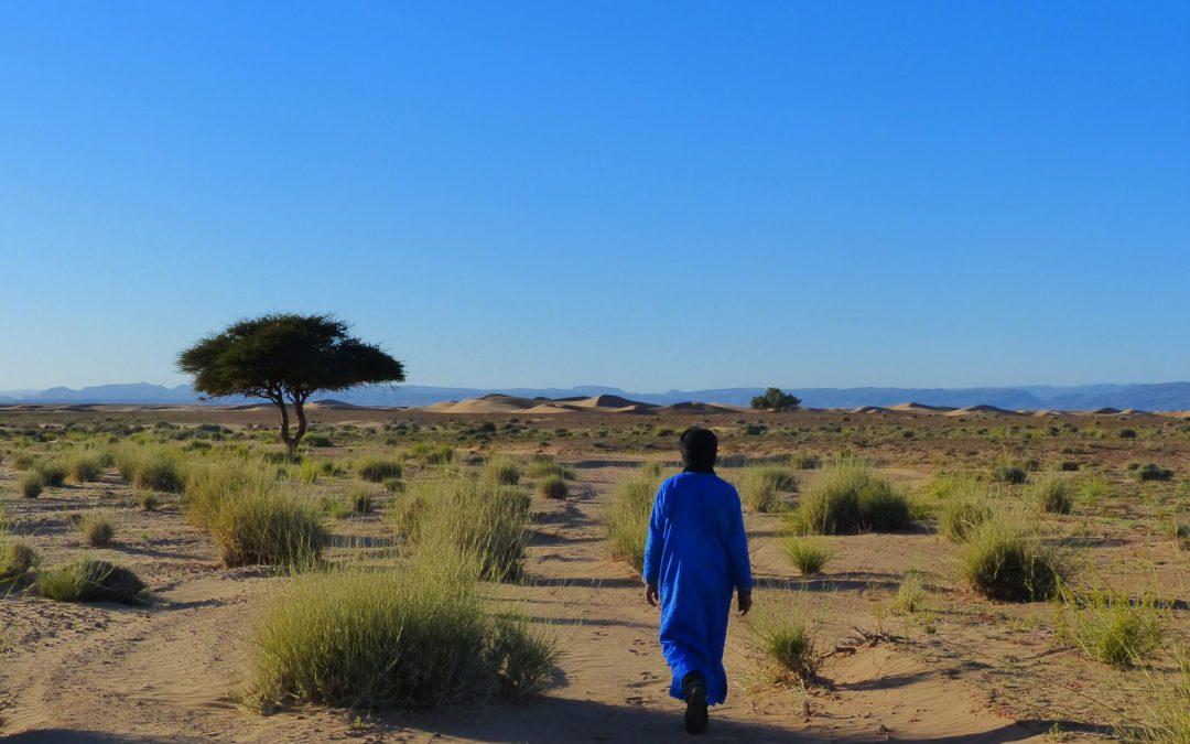 Les Sahraouis : une culture fidèle !