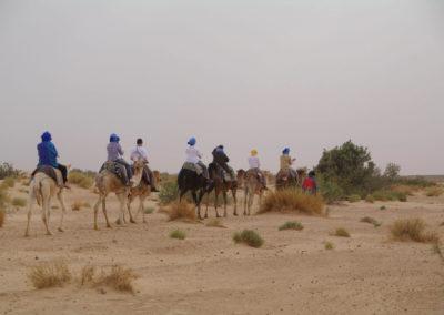 A dromadaire dans le désert