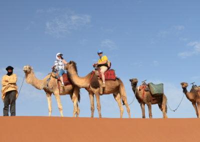 Balade en dromadaire dans le désert au Maroc