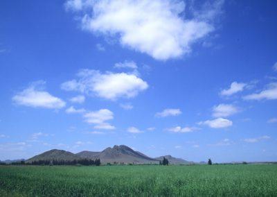 Plaine de Haouz